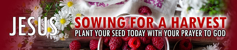 Sow Your Seed for Harvest Donate to GODs Kingdom